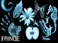 Fringe wallpaper 1