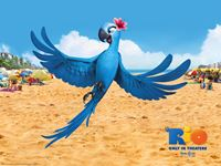 Rio Movie wallpaper 3