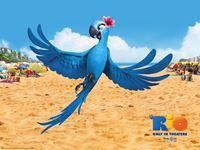 Rio Movie wallpaper 3