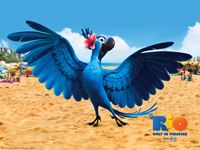Rio Movie wallpaper 7